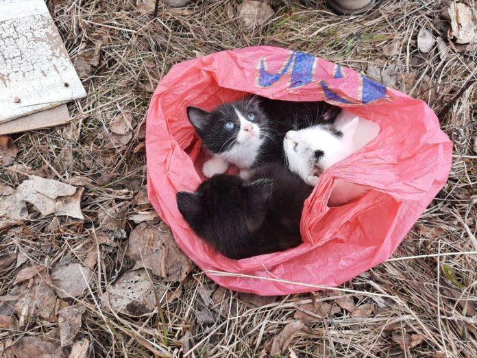 Котята были обнаружены в завязанном пакете