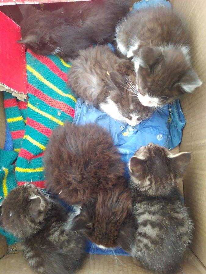 Выброшенные котята