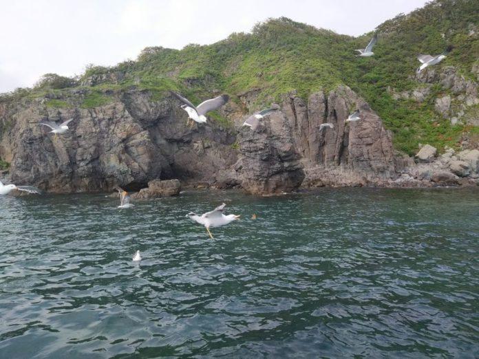 Море, чайки, скалы...