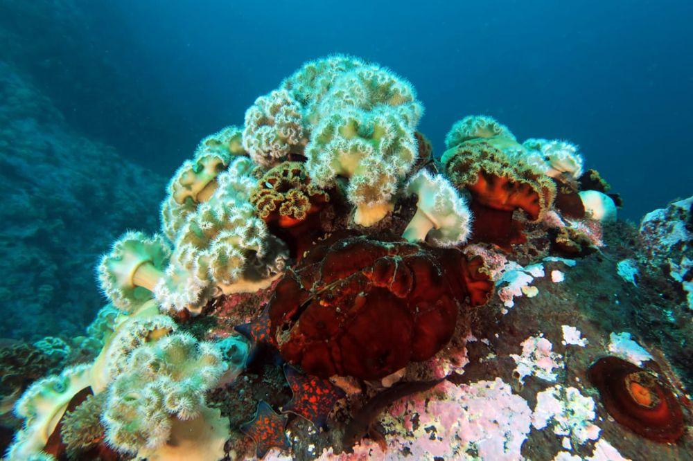 Этот удивительный подводный мир
