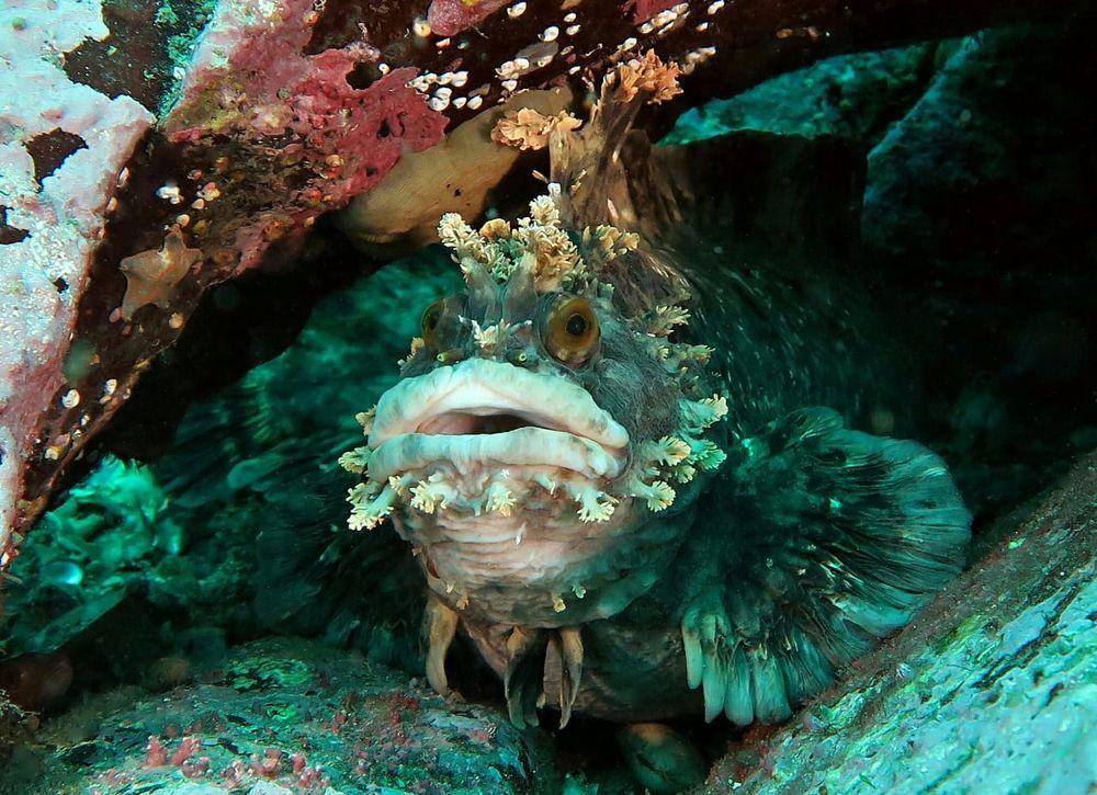 Красавчик - обитатель дна морского