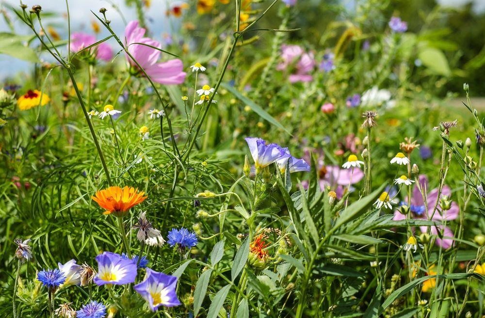 Недолог век цветов луговых. Наслаждайтесь пока есть время!