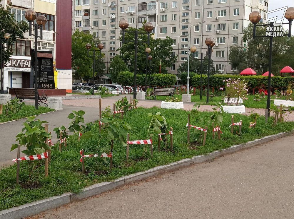 Будет город-сад!